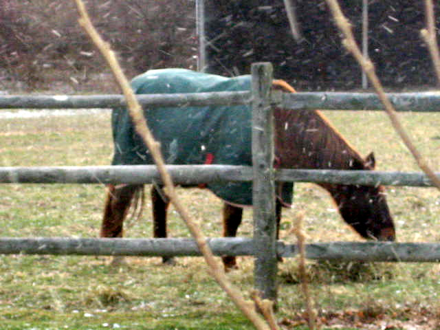 This is a terrible picture of Dev, but it's the only one I have on my computer. It's from Dec 08, it was snowing out.