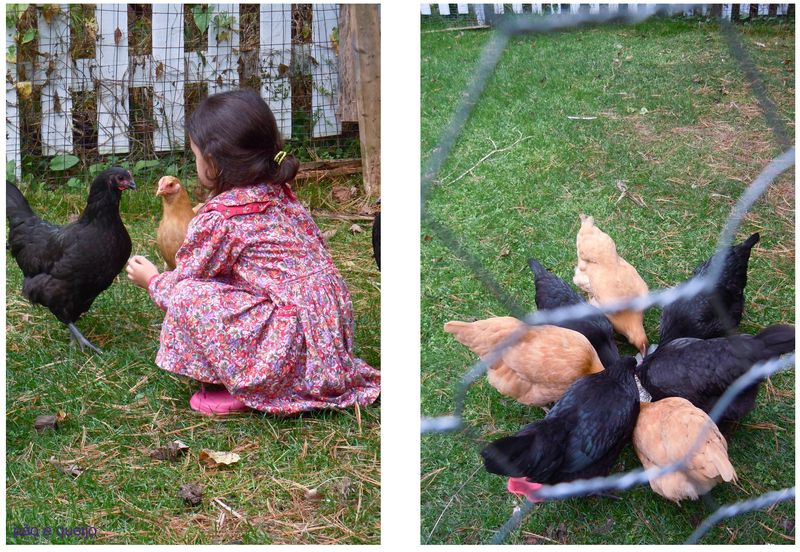 Frida with Em's chickens